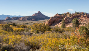 Zion landscape (1 of 1)